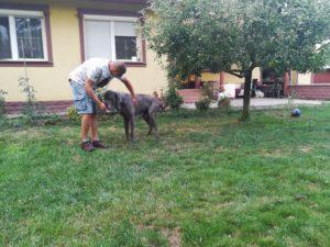 Ako sa zoznámiť so psom - pohladenia