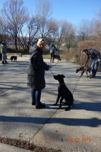 Vycvik psov Bratislava Lamac 017