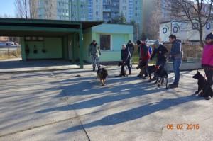 Vycvik psov Bratislava Lamac 052
