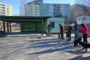 Vycvik psov Bratislava Lamac 054
