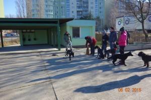 Vycvik psov Bratislava Lamac 055