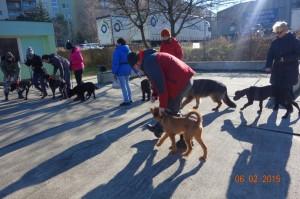 Vycvik psov Bratislava Lamac 060