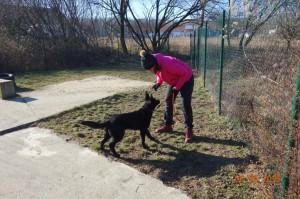 Vycvik psov Bratislava Lamac 070