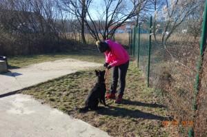 Vycvik psov Bratislava Lamac 071