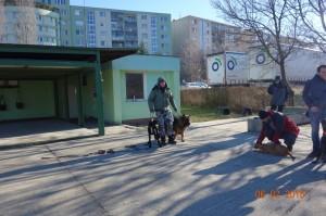 Vycvik psov Bratislava Lamac 075