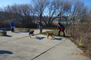 Vycvik psov Bratislava Lamac 079