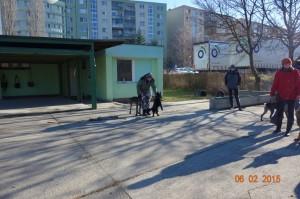 Vycvik psov Bratislava Lamac 080