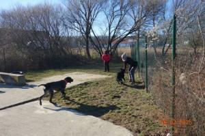 Vycvik psov Bratislava Lamac 081